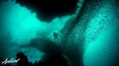 Umber - Low Tide