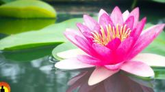 Relaxing Spa Music, Calming Music, Relaxation Music, Meditation Music, Instrumental Music