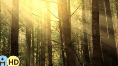 Nature Sounds Relaxing Music, Autumn Forest, Isochronic Tones, Sound Therapy, Relaxation Music